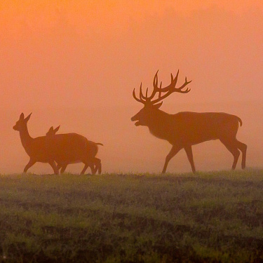 September. Rut time.